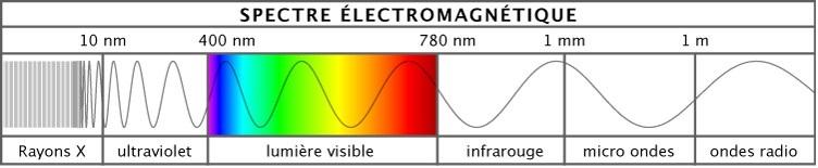 C spectre visuel